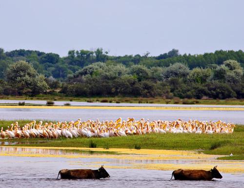 delta dunarii fauna