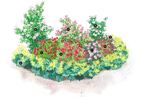 plan de gradina de trandafiri