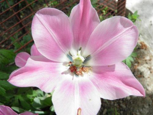 floare-1