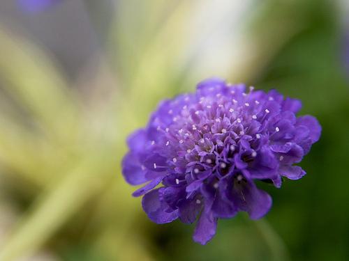 Albastrul fluturelui