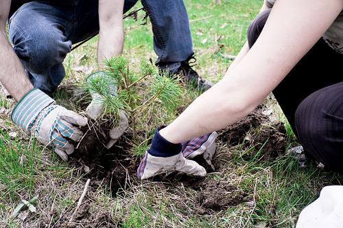 Doi tineri plantand un copac