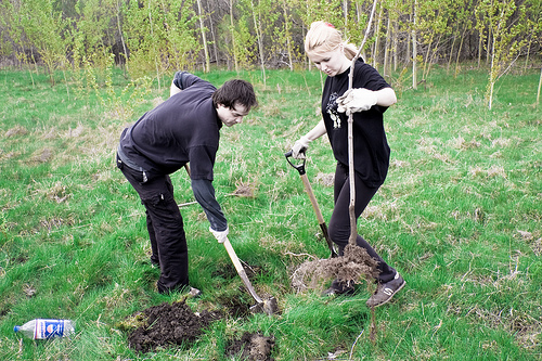 Saparea gropii pentru plantarea pomului