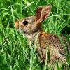 Cum sa tii iepurii departe de gradina ta de legume
