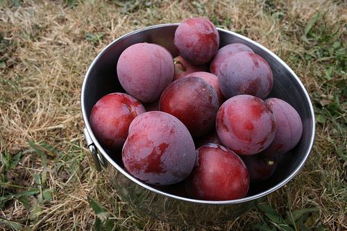 Bucurati-va de gustul si aroma prunelor