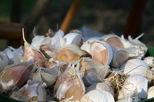 Usturoiul ajuta la cresterea imunitatii