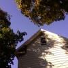 Arborii si arbustii ideali pentru o casa racoroasa!