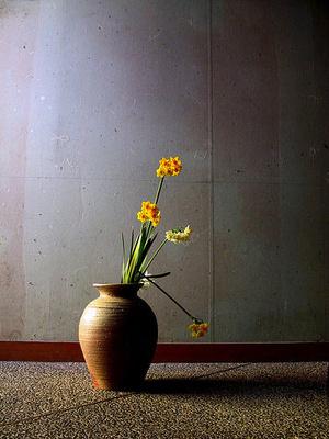 plante frumos mirositoare