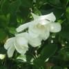 Cele mai frumoase flori parfumate