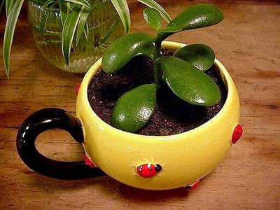 plante suculente