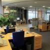 Plante decorative pentru birou