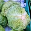 Varza - Brassica oleracea (I) - Despre proprietatile verzei