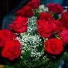 Plantarea si ingrijirea trandafirilor (I)