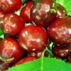Dulceata de cirese sau visine