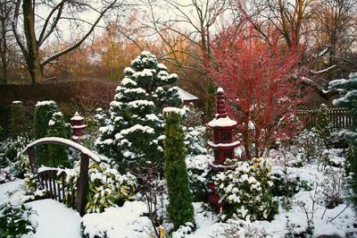 Iarna in gradina