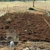 Pregatirea gradinii de legume pentru iarna