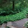 15 sfaturi pentru construirea unei gradini