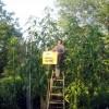 Cea mai inalta planta Amaranthus din lume