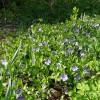 Cele mai nedorite 10 plante de gradina