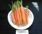 morcov_nabuco