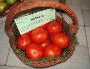 tomate buzau 22