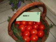 tomate buzau 4