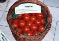 tomate kristin