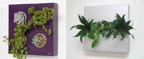 flower-box-plants-582x238_width