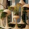 Plante de interior care purifica aerul