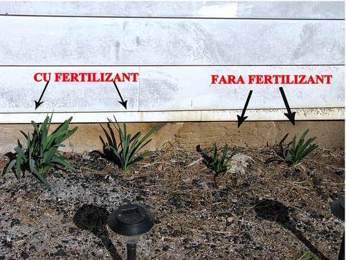 fertilizant