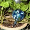 Udarea si fertilizarea florilor: reguli si sfaturi