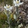 Flori rare din Romania