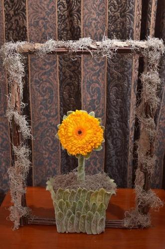 expozitie flori 2
