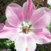 Despre florile si plantele care iti insenineaza ziua