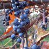 Lucrari horticole pentru luna noiembrie