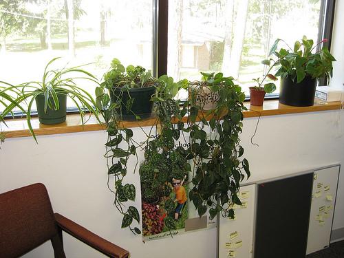 birou ecologic cu plante