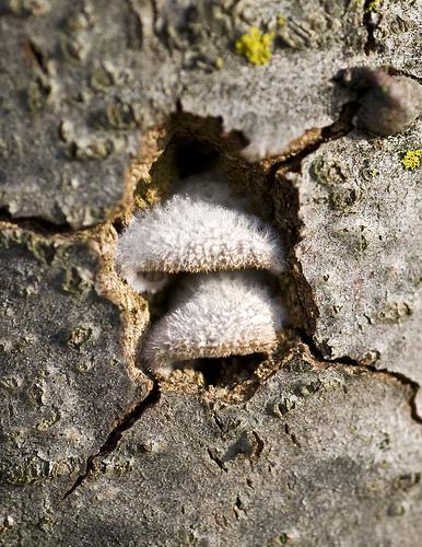ciuperca in scoarta pomului