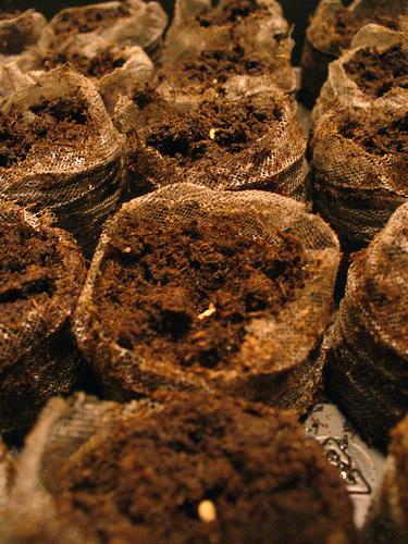 pamant fertilizat pentru flori