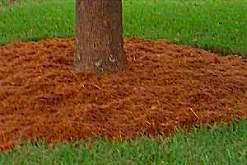 scoarta de copac