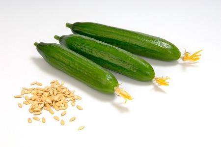seminte castravete