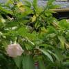 20 de plante otravitoare (I)