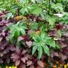 20 de plante otravitoare (II)