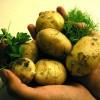Despre cartofi