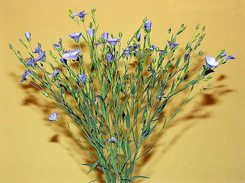 flori de in