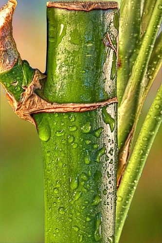 Tulpina de bambus