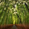 Despre bambus
