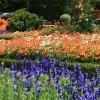 Flori portocalii - Cele mai frumoase flori portocalii