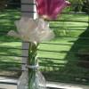 Limbajul si simbolistica florilor (II)