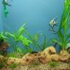 Plante de acvariu – naturale sau artificiale?