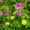 Gradina cu flori salbatice (I)