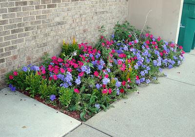 borduri de flori